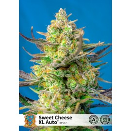 Sweet Cheese XL Auto