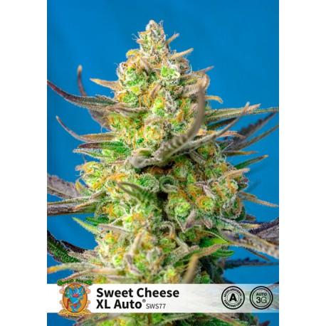 Sweet Cheese XL Auto