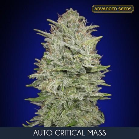 Auto Critical Mass