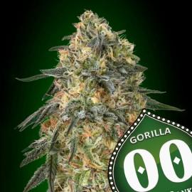 Gorilla de 00 Seeds