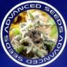 Semillas autoflorecientes Advanced Seeds