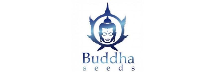 Buddha Seeds
