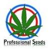 Semillas feminizadas Professional Seeds